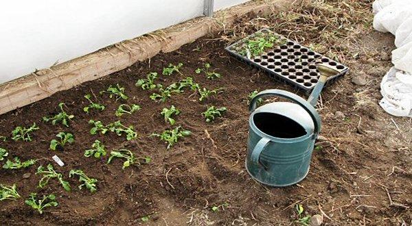 Planting seeds of Organic SEO. On-site optimization.